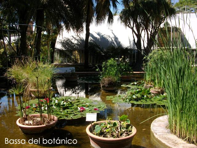 Jardin bot nico valencia actua - Jardin botanico valencia ...