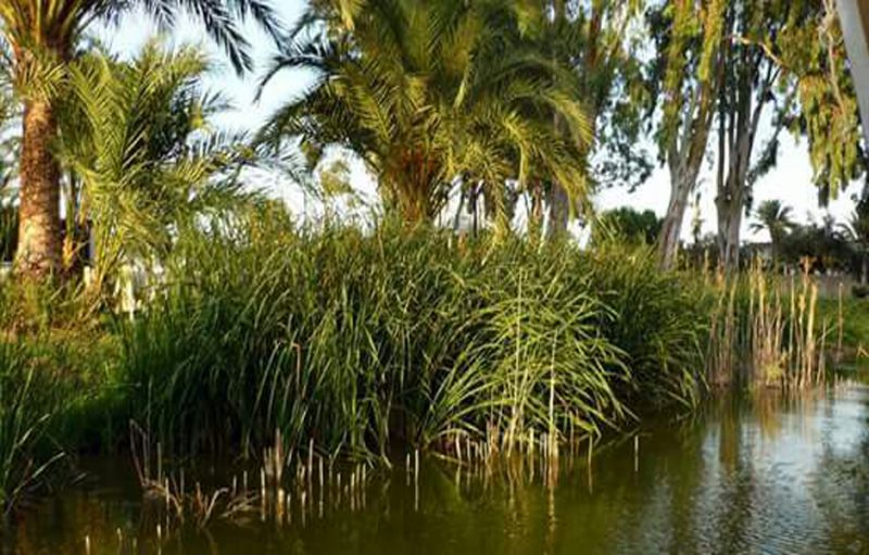 De Lago Real a Parque Natural